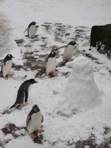 The bravest penguins cautiously approach the 'Snow Penguin'