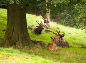 The Nyala herd can be seen on the African Plains enclosure