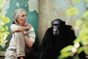 Dr. Jane Goodall with Gombe chimpanzee Freud © Michael Neugebauer