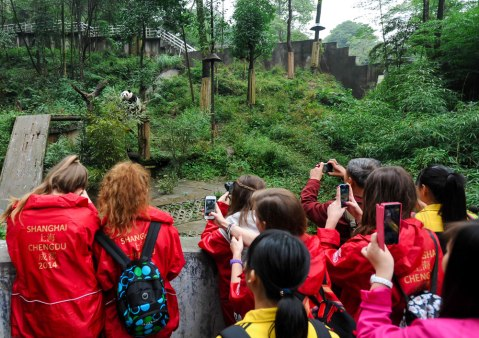 Lasswade students seeing a giant panda