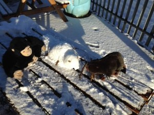 Our mascots Brodie and Gillespie playing in the snow at Our Lady and St Francis Primary School.