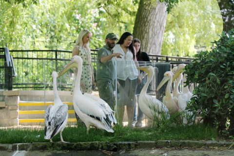 Giant pelican walk-through at Edinburgh Zoo