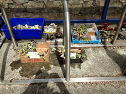 Vegetables grown by pupils at Ulva Ferry Primary School, Mull.