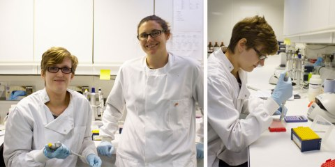 Jane Hosegood, PHD Student at Bangor University at RZSS WildGenes Labratory - photo by Katie Paton